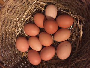 Farm fresh chicken eggs 3.50 per dozen.