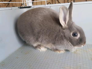 Rabbit and 4' cage