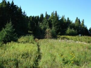 Land for Sale - 33 Barbour Ave., Sandy Cove, Eastport Peninsula
