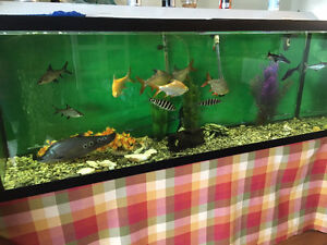 150 Gallon freshwater tank and steel stand for sale
