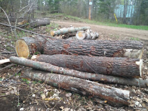 Large Pine Logs available