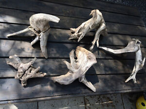 MB Driftwood pieces, stick yard lawn garden, deck, reptiles/fish