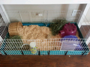 Today only $50- 2 Guinea pigs/4ft cage/shavings/hay/food/bowls