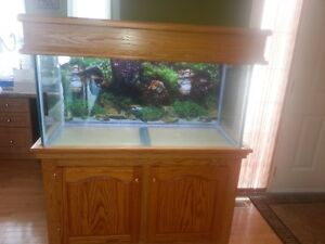 90 galllon fish tank on hard wood stand with canopy