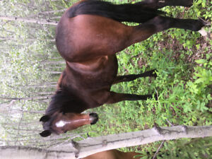 7 mares and fillies for sale