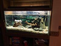 55 gallon Oceanic aquarium