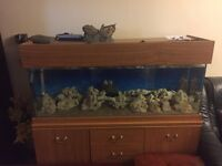 Marine tank and filter for sale ROCKS AND HEATER NOT INCLUDED
