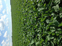 Need more acres...? Farmland for sale