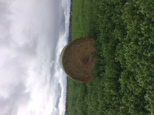 Hay for **$80/tonne**