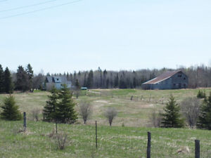 80 Acre Farm for Sale in McIntosh Springs near Connaught