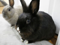 Find new home for bunnies