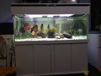 Tropical Fish Tank 5ft x 2ft x 2ft Angel / Discus