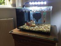 19 litre Nano aquarium