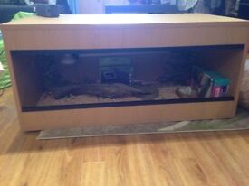 New vivarium setup with baby bearded dragon