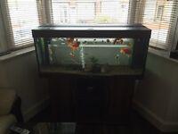 Fish tank for sale (Juwel Rio 240)