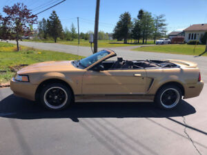 Ford Mustang 2000 Convertible Special Edition