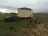 Free Range Organic Eggs From Little Creek Farm