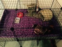 Guinea pigs cage and accessories