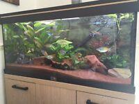 Tropical Fishtank Maintenance