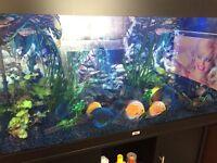 Rio 300 juwel tropical fish aquarium set up