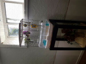 "Zebra finch "" sold """""