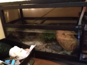 Red ear slider females full grown and tank/trades
