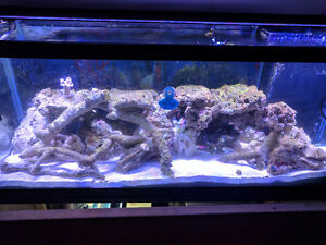 Saltwater aquarium 75 gallon w/everything you need for reef