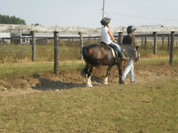 2 spots open for Monday Oct 12 Horse Riding