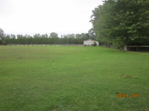 Horse boarding in Rodney Great Trails-Full board or pasture Only