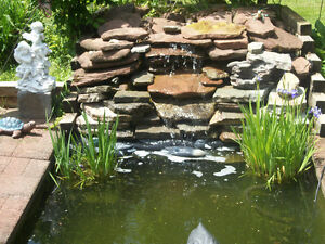 KOI POND FISH STOCK UP NOW  6 FOR   $20.00 ONLY 15 LEFT