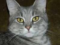 Tulip is waiting for adoption