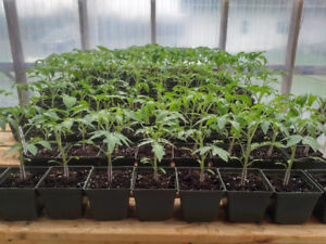 Organic Hot & Sweet Peppers, Heirloom Tomatoes & Herbs