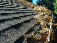 Moss removal, gutter, siding, window, screen cleaning.