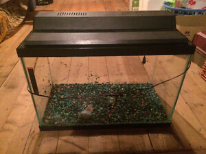 20gal high fish tank + extras