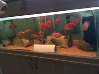 3ft fish tank with all accessories and fish