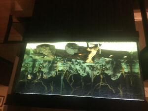75 gallon custom fish tank with fish