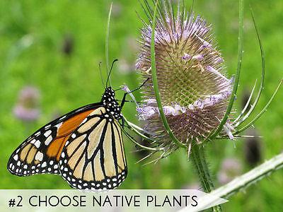 Wähle einheimische Pflanzen