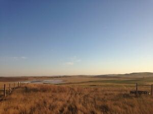 Seeking Fall & Winter Pasture