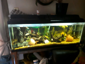 55 gallon fish tank with pump and accessories.