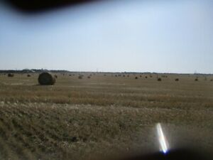 LARGE ROUND HARD CORE WHEAT & OAT STRAW BALES FOR SALE.
