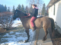 10 yr Old Gelding for sale