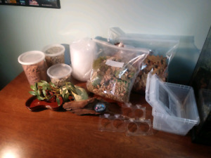 Reptile Accessories Lot