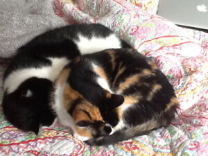 Pika and Bear to REhome