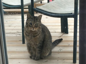 Found Tabby, Welland