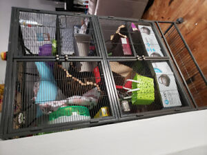 2 amazing friendly female rats with dbl Critter Nation cages.