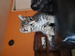 Three Kittens available for adoption !!