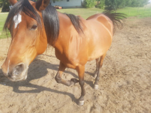 1 horse for sale
