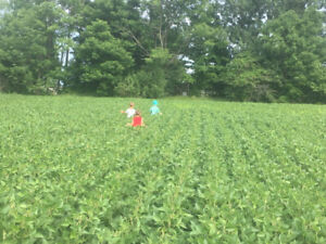 Wanted: Farm land to rent in keady, Chatsworth, Owen Sound areas