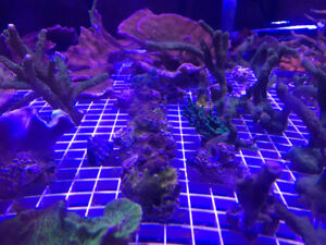 Saltwater tons of corals
