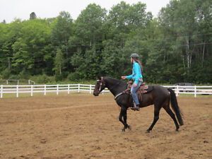 14 Year Old Quarter Horse Mare